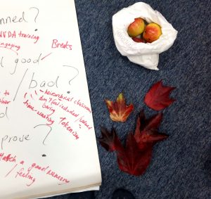 Image of a flipchart with lots of red and black writing on it, there is a bag of apples and some red leaves next to it.